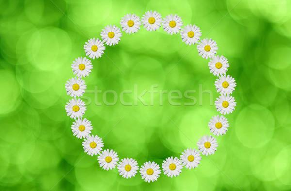 flower circle Stock photo © guffoto