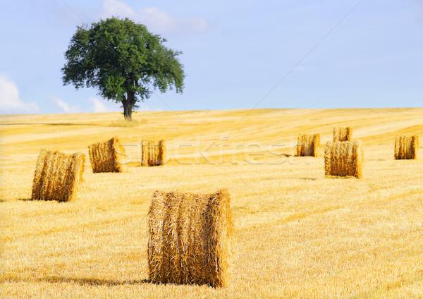 соломы небе дерево пейзаж пшеницы Сток-фото © guffoto
