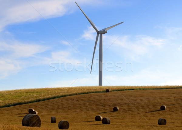 Słomy energii niebo charakter dziedzinie Zdjęcia stock © guffoto