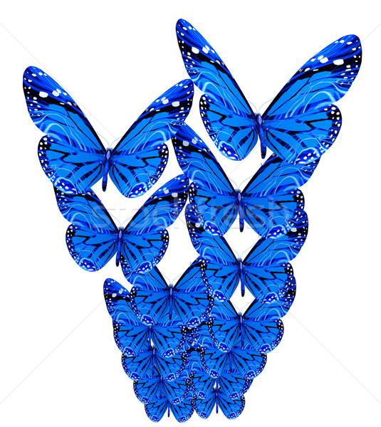 Kelebekler beyaz kelebek doğa güzellik siyah Stok fotoğraf © Guru3D