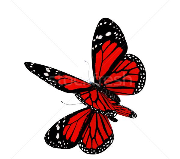 Butterfly Stock photo © Guru3D
