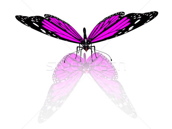 Kelebek beyaz doğa güzellik siyah bitki Stok fotoğraf © Guru3D