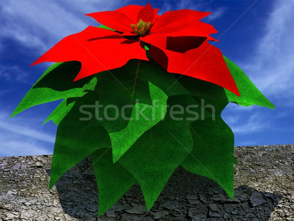 Beautiful poinsettia Flower Stock photo © Guru3D
