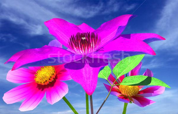 Beautiful Cosmos Flower Stock photo © Guru3D
