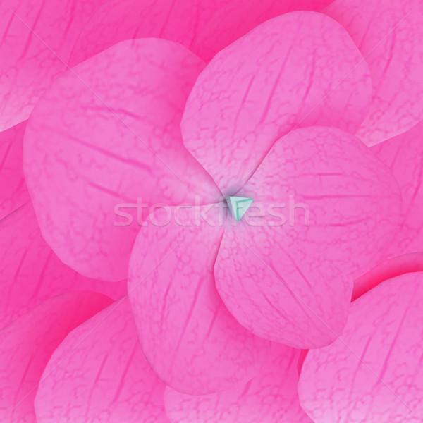 Bloemen bloemblaadjes roze mooie bloem voorjaar Stockfoto © Guru3D