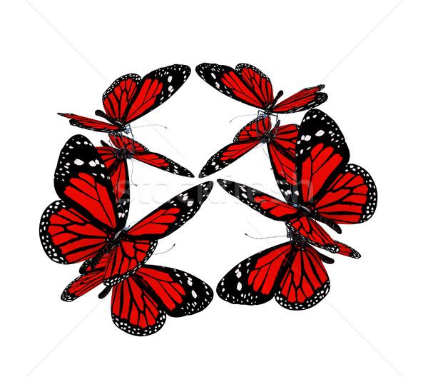Vlinders witte vlinder natuur schoonheid zwarte Stockfoto © Guru3D