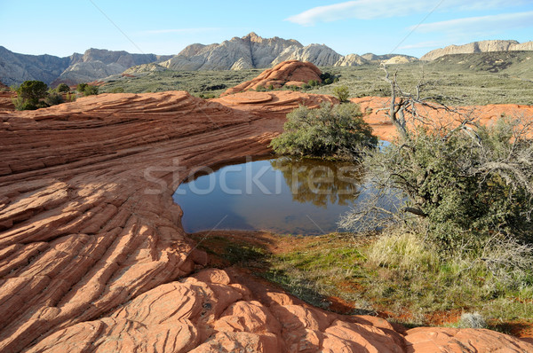 Petrified Sand Dunes - Snow Canyon, Utah Stock photo © gwhitton