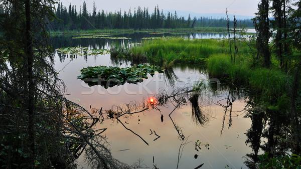 Vegetatie meer bos hemel natuur landschap Stockfoto © gwhitton