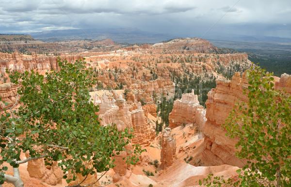 Kanion lata burzy drzew podróży rock Zdjęcia stock © gwhitton