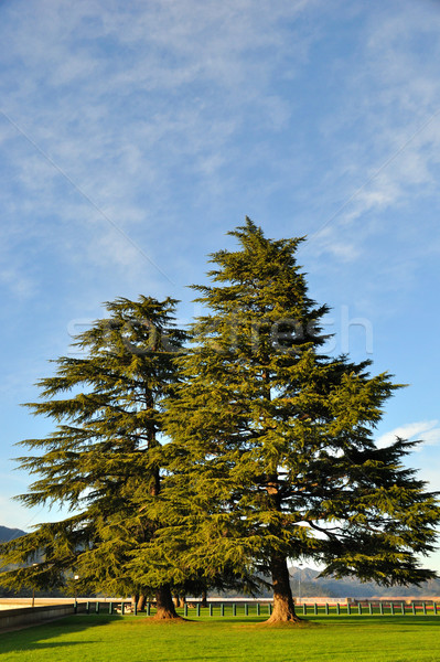 松 木 湖 空 雲 ストックフォト © gwhitton
