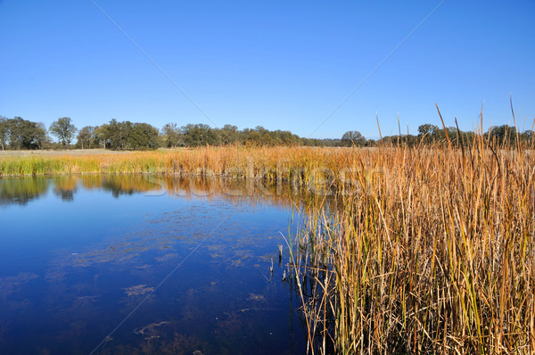カリフォルニア ツリー 自然 湖 池 反射 ストックフォト © gwhitton