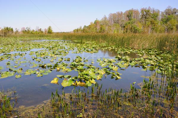 Florida estanque Lily hierba paisaje árboles Foto stock © gwhitton