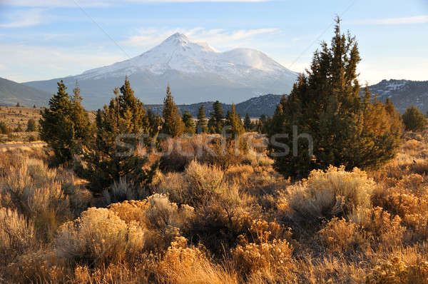 Mount Shasta in the Fall  Stock photo © gwhitton