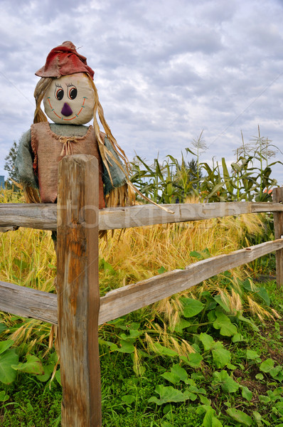 Scarecrow in Corn and Squash Patch Stock photo © gwhitton