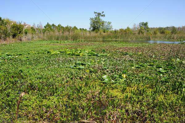 フロリダ 植生 水 風景 緑 ストックフォト © gwhitton