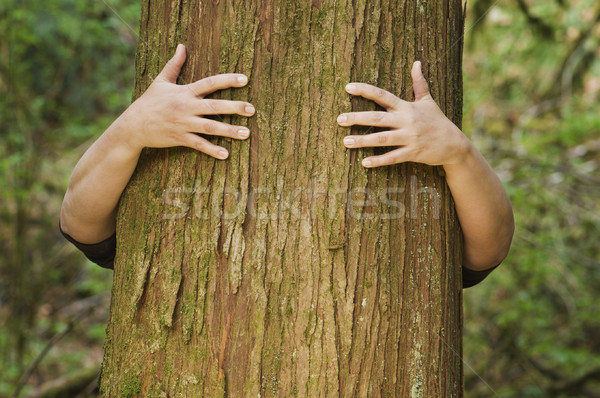 Person hugs a tree Stock photo © Habman_18