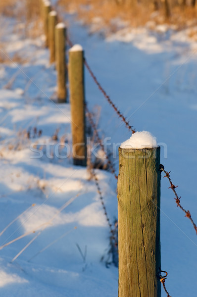 Barbed-wire fence in snow Stock photo © Habman_18