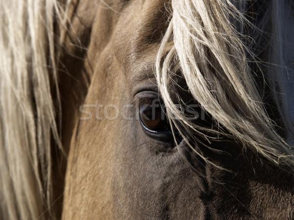 At göz atlar Stok fotoğraf © Habman_18