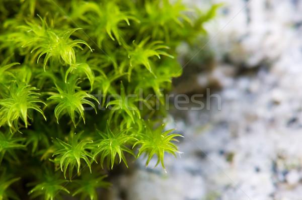 Yeşil yosun granit kaya büyüyen Stok fotoğraf © Habman_18