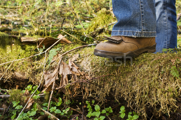 Boot stepping on a log Stock photo © Habman_18