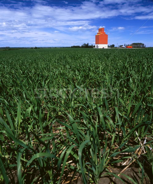 Grain elevator in young, green wheat field Stock photo © Habman_18