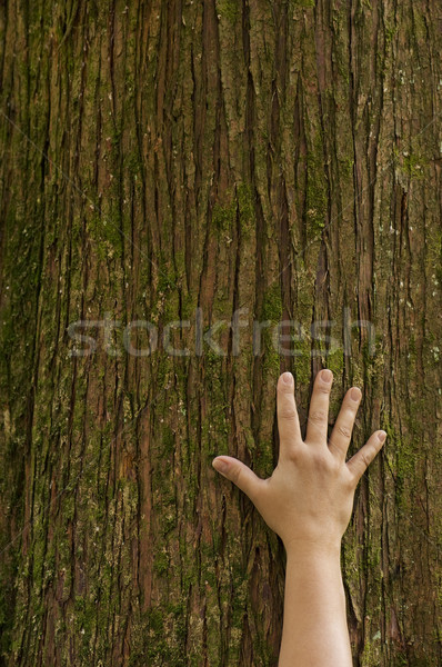 Hand on tree trunk Stock photo © Habman_18