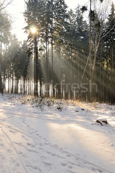 Floresta inverno cenário luz árvore Foto stock © hamik
