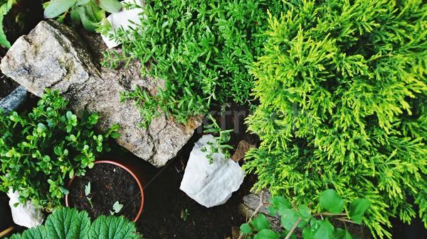 Stock fotó: Miniatűr · kő · kert · felső · lefelé · kilátás
