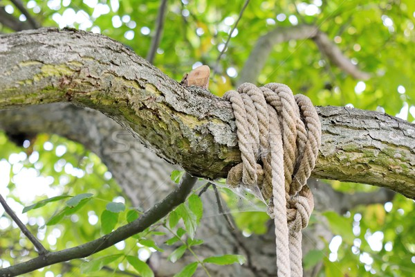 Knot on branch Stock photo © hamik