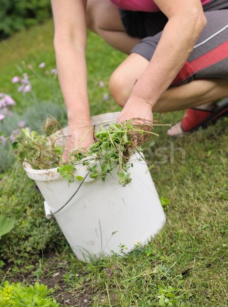 ガーデニング 庭園 作業 花 雑草 手 ストックフォト © hamik