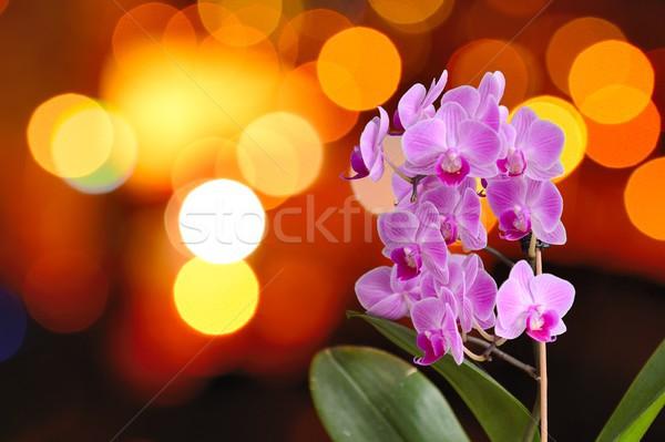 Orquídea luzes rosa turva laranja Foto stock © hamik
