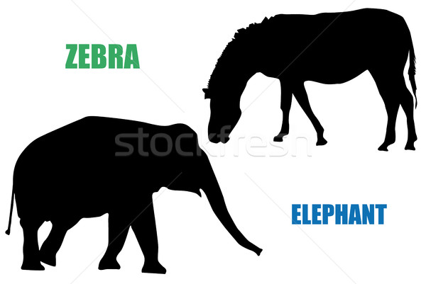 Zebra and elephant Stock photo © hamik