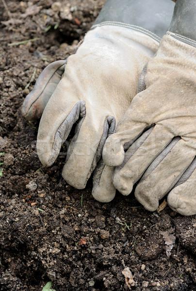 Dolgozik kesztyű bőr munka kert kosz Stock fotó © hamik