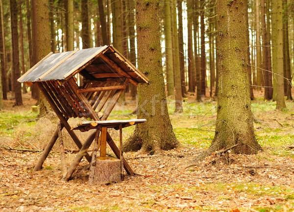 動物 木材 森林 フィールド ラック 栄養 ストックフォト © hamik