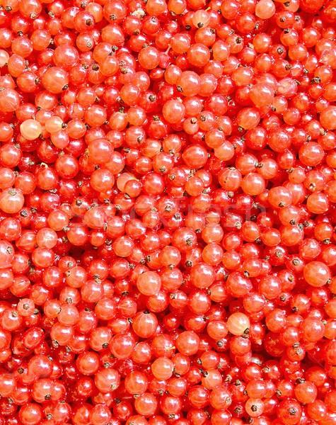Red currants Stock photo © hamik