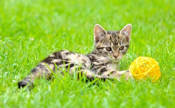 Playing cat Stock photo © hamik