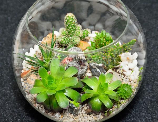 Table top plant decorative garden Stock photo © hamik