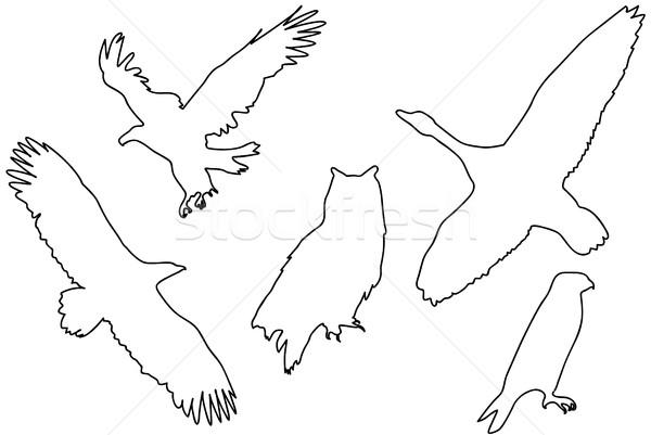 Black silhouettes of birds Stock photo © hamik