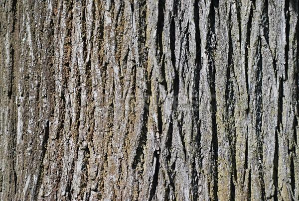Arbre écorce vieux mur design Photo stock © hamik