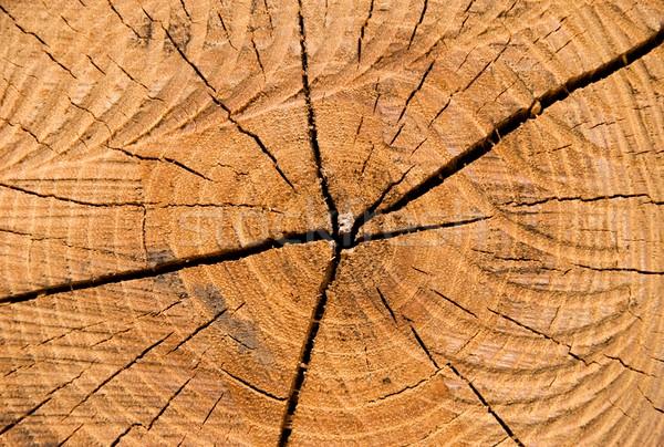 Annuale primo piano immagine anello albero abstract Foto d'archivio © hamik