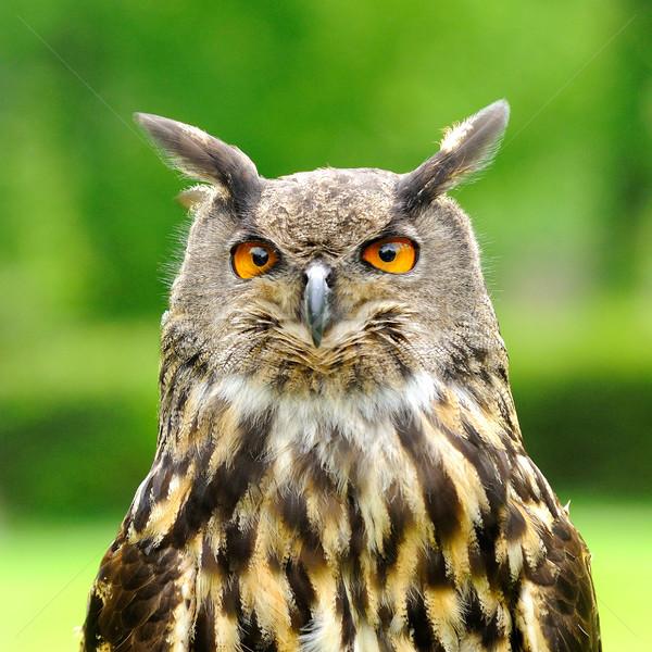 Oehoe vogel hoofd portret ogen veer Stockfoto © hamik