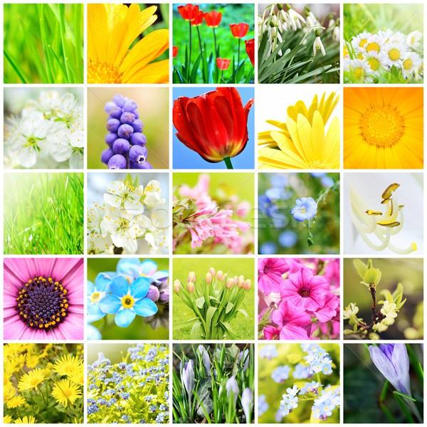 Voorjaar natuurlijke collage abstract planten bloemen Stockfoto © hamik