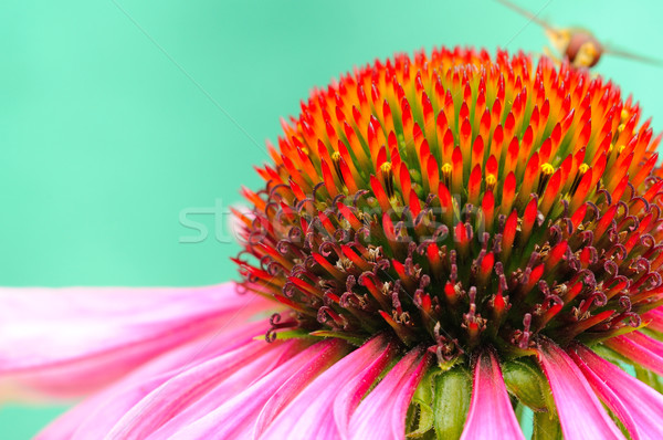 Vermelho flor macro tiro vespa Foto stock © hamik