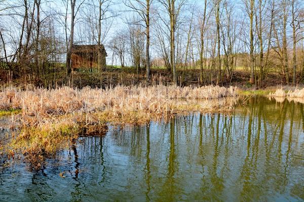 Wetland Stock photo © hamik