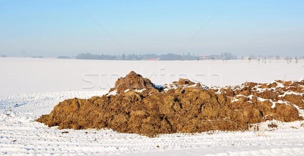 Tas scène rurale vache neige ferme animaux Photo stock © hamik