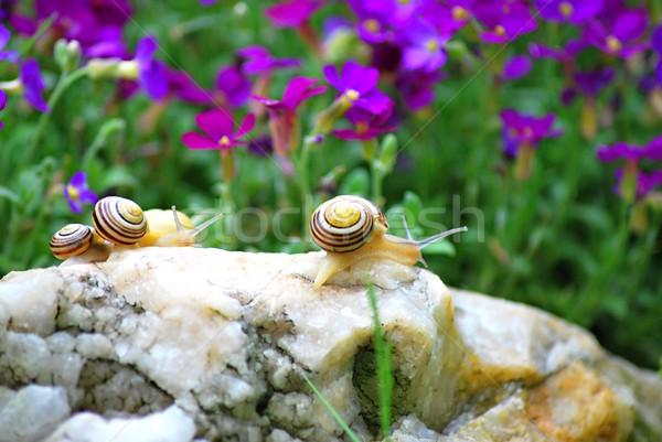 Paar Makro wenig Frühling Natur Blatt Stock foto © hamik