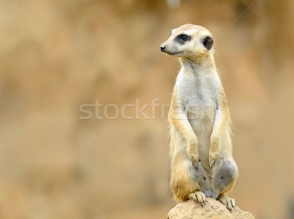 Bekçi sevimli taş kahverengi kumlu Stok fotoğraf © hamik