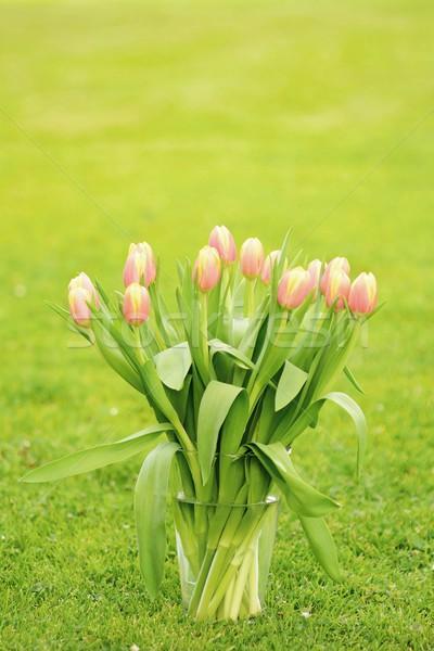 Tulipani vetro vaso rosa erba giardino Foto d'archivio © hamik