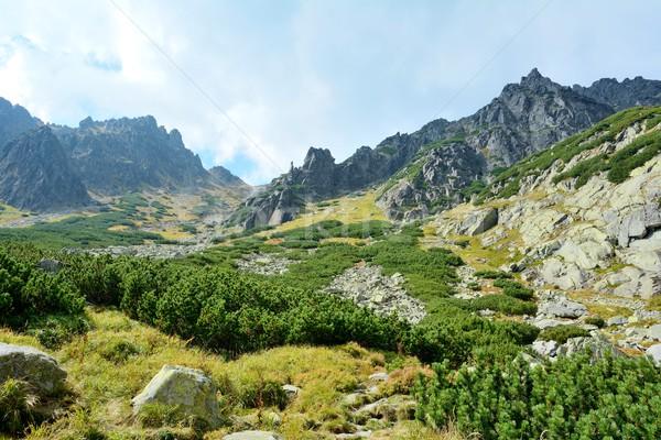 Alto natura montagna Slovacchia foresta stream Foto d'archivio © hamik