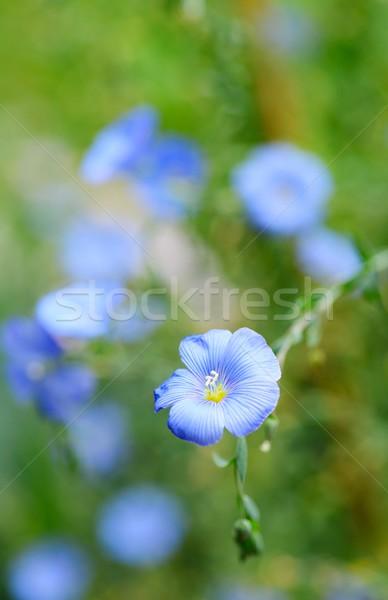 Flor flor macro tiro verde flores Foto stock © hamik